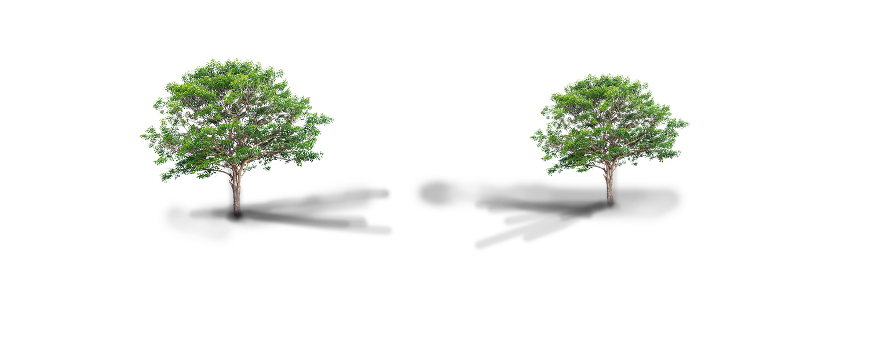 Dos árboles frondosos y delgados