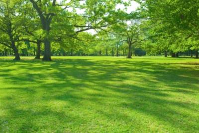 horario de visitas parque cementerio julio